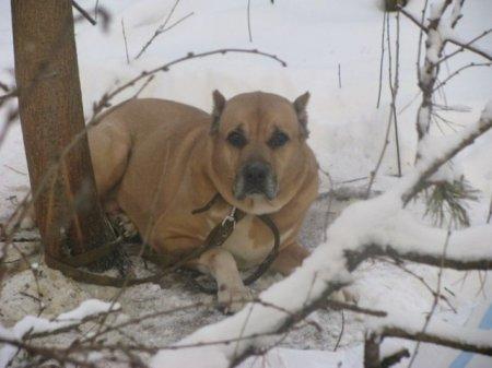 В Ижевске собаку оставили умирать в лесу