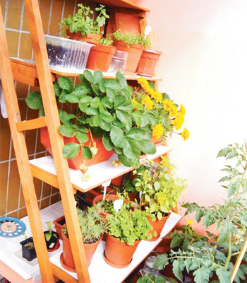 """Грядки"""" на балконе: какие сорта огурцов и помидоров подходят."""
