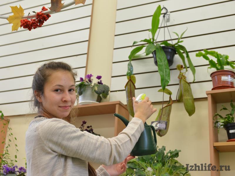 Как сажать семена венериной мухоловки 61