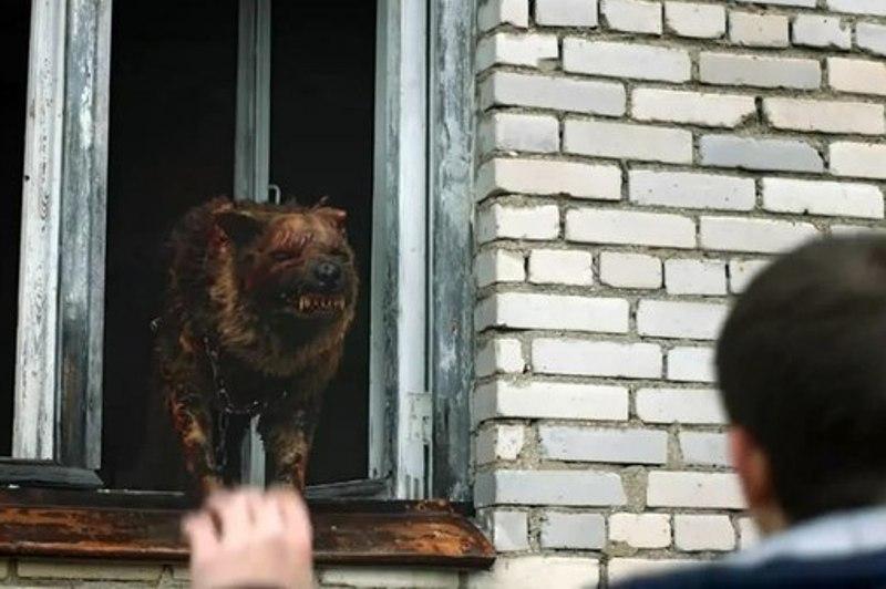 Смотреть видео чернобыль зона отчуждения