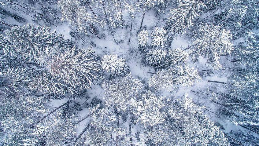 Фото в зимних узорах фотомонтажер