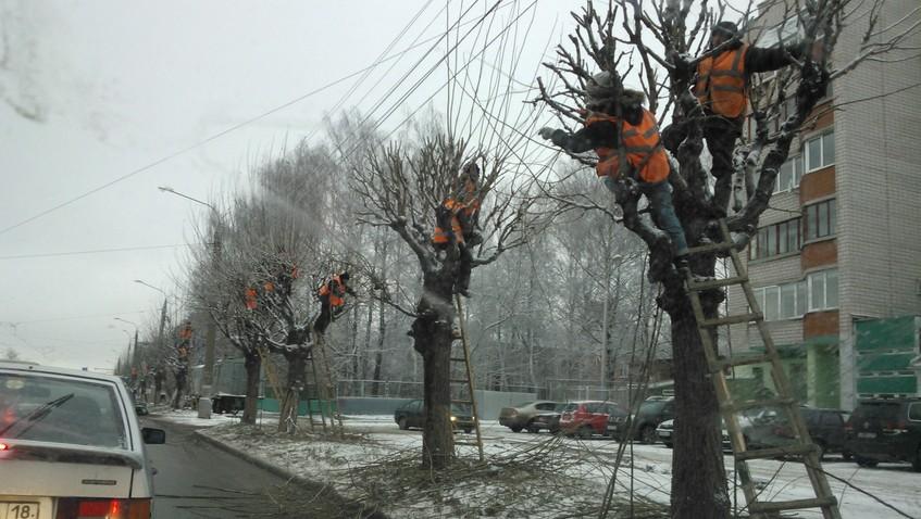 кто занимается обрезкой деревьев