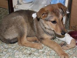 Ижевские школьники собрали деньги на операцию собаке