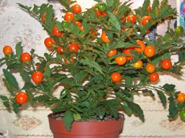 Комнатные растения: лекари или вредители?