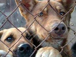 Власти Ижевска просят сообщать о стаях бродячих собак