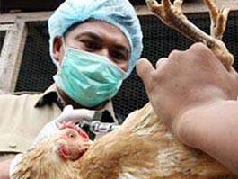 Ижевчане могут привезти «птичий грипп» из Египта