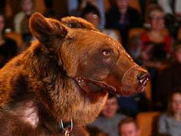 Медвежата из ижевского зоопарка могут стать артистами Московского цирка