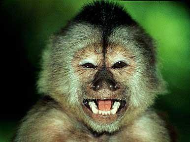 В ижевском зоопарке можно назвать обезьяну в честь своей второй половинки