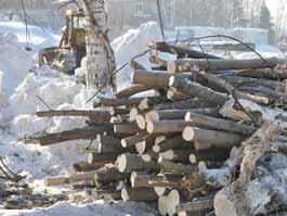 Лес у речки Карлутки в Ижевске вырубили подчистую