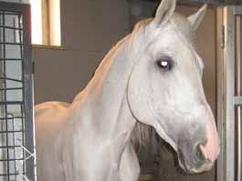 На цирковой фестиваль в Ижевске привезли лошадь, снявшуюся в фильме скандального журналиста Александра Невзорова