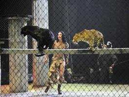 В Ижевском цирке хищники испугались перьев