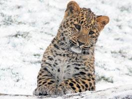 Фотоссесия с животными ждет миллионного посетителя зоопарка Ижевска