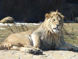 В ижевском зоопарке проведут экскурсию по Красной книге