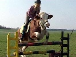 Дочь фермера выдрессировала быка на лошадиный манер