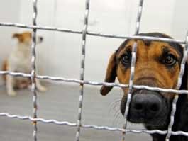 Китайские защитники животных спасли собак, которых везли в рестораны «на мясо»