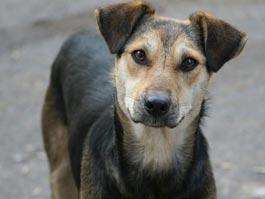 В Удмуртии женщина убила пса за то, что он топтал грядки