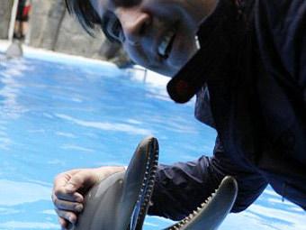 Саакашвили попытался засунуть голову в пасть дельфину