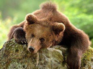 Голодного медвежонка, ворвавшегося в многоэтажку, застрелили