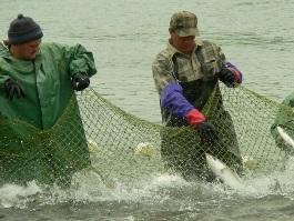 В Удмуртии запретили ловить рыбу сетями с моторных лодок