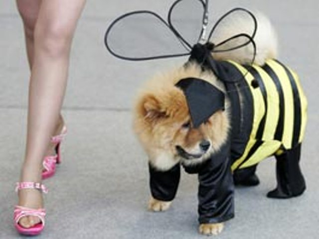 Впервые в Ижевске пройдет костюмированный парад собачек