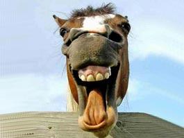 Неадекватная лошадь напала в Москве на трех женщин