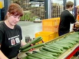 В России запретили ввозить овощи из Евросоюза