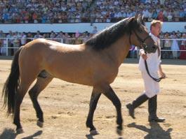 Во время празднования «Сабантуя» в Ижевске выберут самую лучшую лошадь