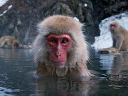 Ижевский зоопарк собирает деньги для пострадавших животных Японии