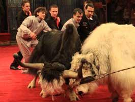 ЧП в Ижевском цирке: яки дорвались до драки