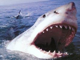 В Бразилии акула напала на молодого серфера