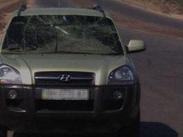В Удмуртии при столкновении иномарки с лосем погибла семья из 3 человек
