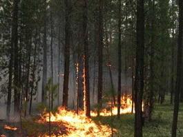 За брошенную в лесу сигарету ижевчан будут штрафовать