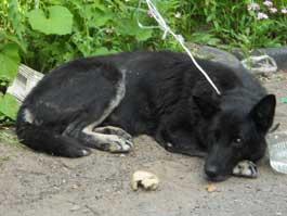 В Ижевске собака уже четыре дня ждет хозяина у почтового отделения