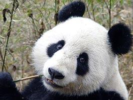 Летняя ночь в зоопарке: ижевчан превратили в животных и показали двухметровых панд