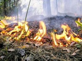 В эти выходные в лесах Удмуртии возрастет вероятность пожаров