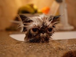 Жительница Шотландии час полоскала котенка в стиральной машине