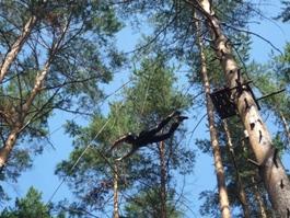Ижевчане ради исполнения желаний прыгают с 10-метровой сосны