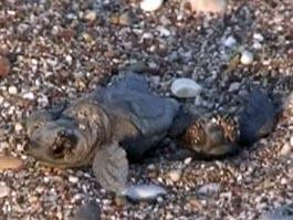 Пляжи турецкой Антальи пришлось закрыть в разгар туристического сезона