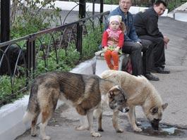 Сити-менеджер Ижевска решил всерьез заняться бродячими животными