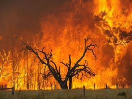 Удмуртия нуждается в парашютистах-десантниках, которые тушили бы лесные пожары