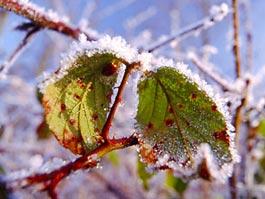 Синоптики Ижевска обещают снег уже на этой неделе