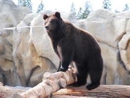 В Ижевском зоопарке готовят к спячке медведей