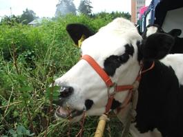 В Удмуртии не ожидают значительного удорожания молока