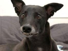 В Лос-Анджелесе собакам разрешили лаять не больше 10 минут