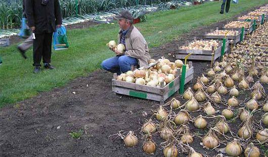 Картошка, капуста и лук сезонно подорожали в Удмуртии