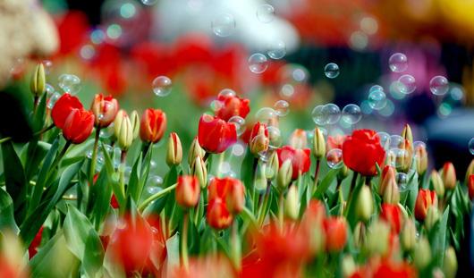 Праздничные ярмарки цветов отменили в Ижевске