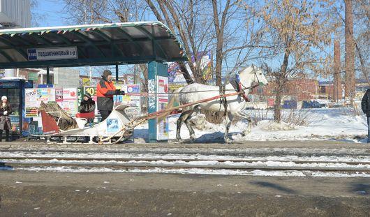 Фотофакт: на остановку общественного транспорта в Ижевске подъехала лошадь с санями