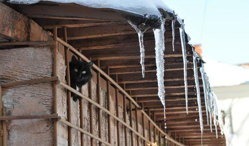 Фотофакт: мартовские коты и капель в Ижевске