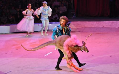 Кенгуру-балерина, 250 тонн воды на манеже: что увидят ижевчане на новом представлении в цирке