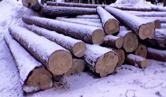 В Удмуртии незаконно вырубили лес